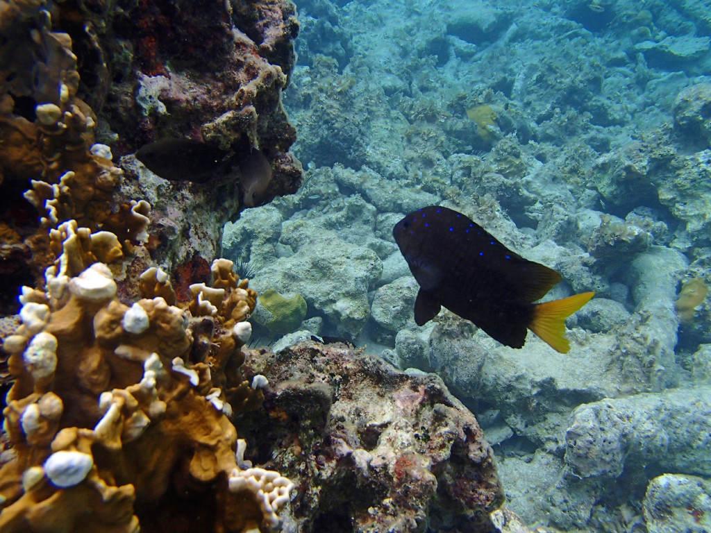 Dom_Republik_Unterwasserwelt